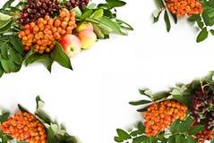 Ceniza y manzanas salvajes Foto de archivo libre de regalías
