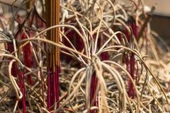 Cenizas de los palillos de ídolo chino Imagenes de archivo