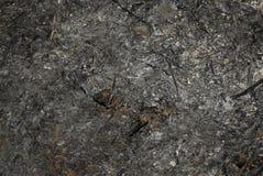 cenizas del heno Fotos de archivo libres de regalías
