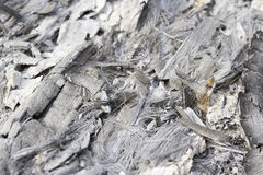 Cenizas quemadas de las ramitas, hierba Imagenes de archivo