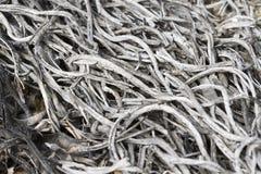 Cenizas quemadas de las ramitas, hierba Imagen de archivo libre de regalías