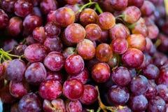 Cenni storici dell'uva Immagine Stock Libera da Diritti