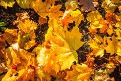 Cenni storici della natura di autunno Fotografia Stock