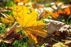Cenni storici della natura di autunno Fotografie Stock