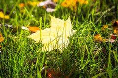 Cenni storici della natura di autunno Immagini Stock