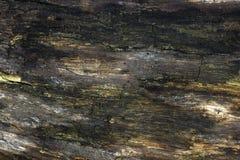 Cenni storici di legno di struttura del nero scuro Fotografia Stock