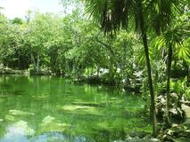 cenote密林玛雅人玛雅quintana里维埃拉roo 库存图片