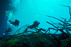 Cenote подводное стоковая фотография