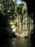Cenote Fotos de archivo libres de regalías