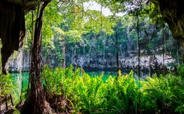 Cenote av Santo Domingo royaltyfri bild