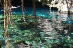 Cenote Azul dichtbij Tulum Mexico stock foto