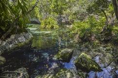 Cenote Azul em México #4 foto de stock royalty free