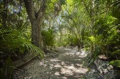 Cenote Azul em México #3 fotos de stock