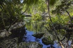 Cenote Azul em México #8 foto de stock