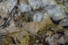 Cenote Cave Interior stock photography