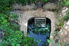 Cenote Cave in Yucatan Mexico Stock Photography