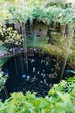 Cenote in chichen-Itza, Mexico stock afbeeldingen