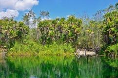 Cenote Cristal, Mexiko Lizenzfreies Stockfoto
