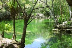 cenote dżungli majowia majski quintana Riviera roo fotografia royalty free
