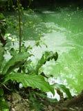 cenote dżungli majowia majski quintana Riviera roo Fotografia Stock