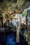 Cenote de Cuzama, Iucatão, México fotos de stock royalty free