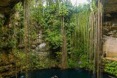 Cenote de Ik-Kil perto de Chichen Itza, México fotografia de stock