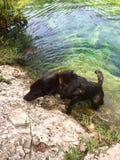 Cenote del perrito Foto de archivo