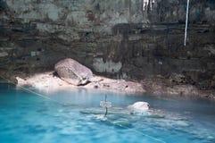 Cenote di Samula Il Yucatan-Messico fotografie stock