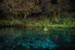 Cenote DOS Ojos royaltyfri bild