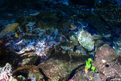 Cenote Dos Ojos. With clear blue water Stock Photos