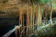 Cenote Dos Ojos con agua azul clara imagen de archivo
