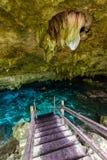 Cenote Dos Ojos i Quintana Roo, Mexico Folk som simmar och snorklar i klart vatten Denna cenote  royaltyfria foton