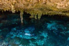 Cenote Dos Ojos i Quintana Roo, Mexico Folk som simmar och snorklar i klart vatten Denna cenote  fotografering för bildbyråer