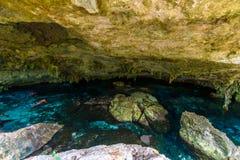 Cenote Dos Ojos i Quintana Roo, Mexico Folk som simmar och snorklar i klart vatten Denna cenote  royaltyfria bilder