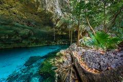 Cenote Dos Ojos i Quintana Roo, Mexico Folksimma och sno royaltyfri foto