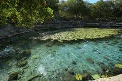Cenote a Dzibilchaltun Immagini Stock