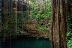 Cenote Ecoturistico Ik-Kil Stockfoto