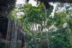 Cenote Ik Kil blisko Chichen Itza, Meksyk Obrazy Stock