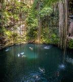 Cenote Ik Kil - Yucatan, Mexico Royalty Free Stock Photography