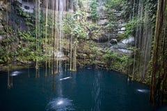Cenote Iucatão México de Ik-kil Fotografia de Stock