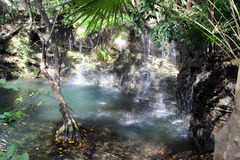 Cenote jezioro w Meksyk zdjęcia stock