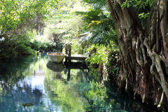 Cenote lake in Mexico Stock Photography