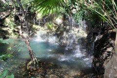 Cenote lake in Mexico. Cenote lake in Riviera Maya jungle stock photos