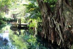 Cenote lake in Mexico. Cenote lake in Riviera Maya jungle stock photo