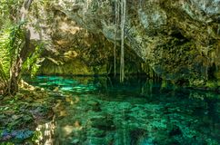 Cenote magnífico en México fotos de archivo
