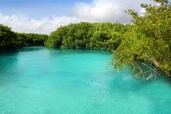 Cenote mangrove turquoise water Mayan Riviera Royalty Free Stock Images