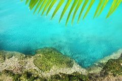Cenote mangrove turquoise water Mayan Riviera. Cenote mangrove clear turquoise water Mayan Riviera Mexico Stock Image