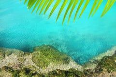 Cenote mangrove turquoise water Mayan Riviera Stock Image