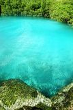 Cenote mangrove turquoise water Mayan Riviera Royalty Free Stock Photo
