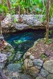 Cenote nella giungla fotografie stock libere da diritti